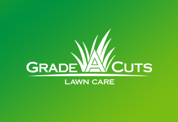 New Grade A Cuts Post Coming Soon