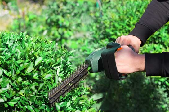 Bush & Hedge Trimming Service