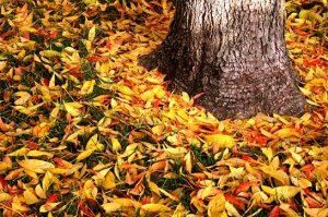 Leaf Cleanup & Removal