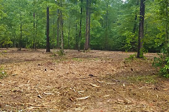Forestry Mulching